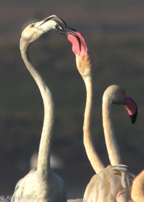 Flamingo Wars Scene 2