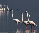 Looks like Flamingo Family.
